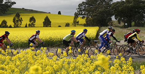 Cycling though canola fields.